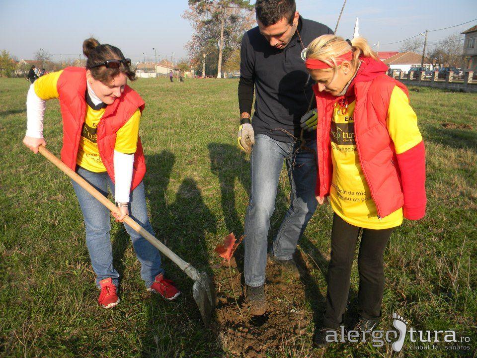 cum plantam copaci la Mosnita Veche